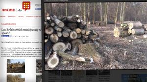 """Wycinka w Lesie Bródnowskim. """"Robimy miejsce dla cenniejszych gatunków"""""""