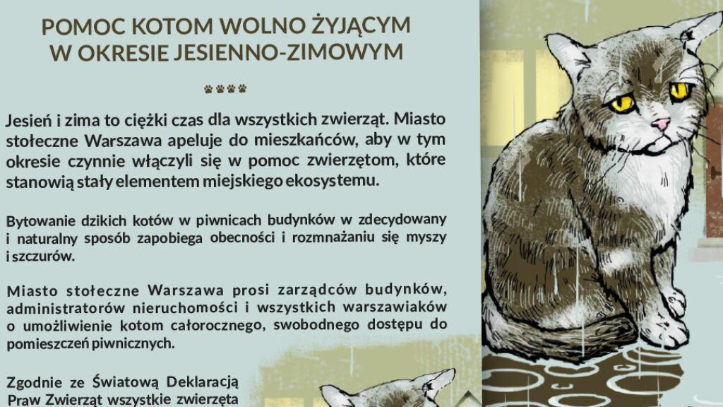79c9eac5249e57 Pomóż kotom przetrwać zimę. Apel prezydent miasta