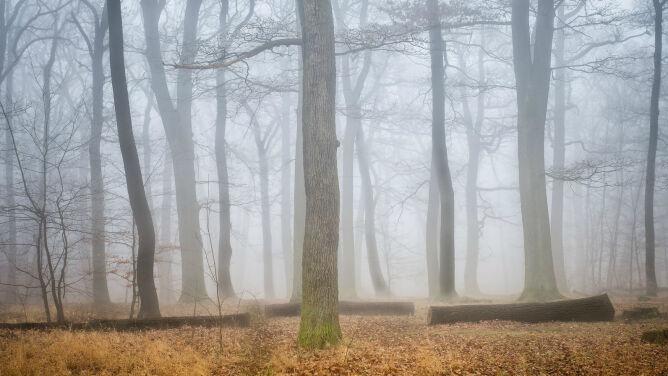 Gęste mgły nad Polską. Ostrzeżenia IMGW