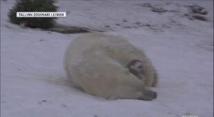 Zima w zoo w Tallinie
